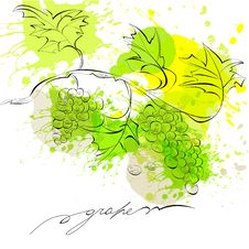 Free Sketch Of Grapes Stock Photo - 20689290