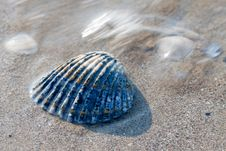Free Multicolored Shell Stock Photography - 20689782