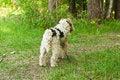 Free Fox Terrier Stock Photos - 20691233