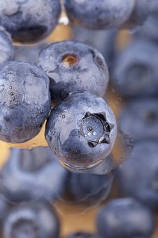 Free Blueberries With Waterdrops Stock Photos - 20690163