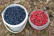 Free Bucketfuls Of Wild Bilberries And Raspberries Royalty Free Stock Photos - 20690328