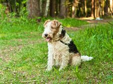 Free Dog Sitting In The Woods Royalty Free Stock Photography - 20691337