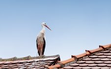 Free Stork Stock Images - 20692214