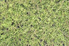 Free Pattern Flower Grass Royalty Free Stock Photos - 20693848