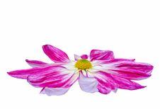Free Florist S Mun Stock Images - 20694474