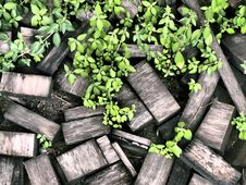 Free Old Wood Chips Stock Image - 20695401