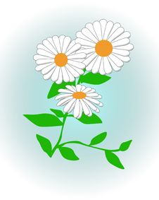 Free Daisy Daisy Stock Photo - 20695430