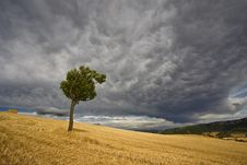 Tree And Storm Royalty Free Stock Image