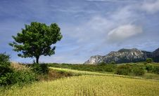 Free Tree And Mountains Royalty Free Stock Photography - 20695707