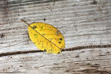 Free Autumn Leaf Royalty Free Stock Photography - 20695907