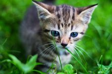 Free Kitty Looking Down In Front Of Grass Royalty Free Stock Photos - 20696708