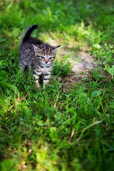 Free Kitty Looking Frighten On The Loan Royalty Free Stock Images - 20696759