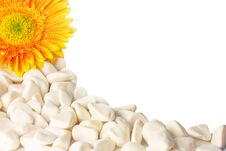 Free Flower And White Pebbles Isolated On White Royalty Free Stock Photos - 20697808