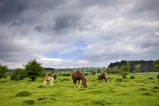 Free Horses In Meadow Royalty Free Stock Images - 20698379