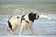 Free Dog At The Beach Royalty Free Stock Photo - 20698465