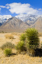 Free Desert Plant Near Death Valley With Snow Capped Mountains In The Background Royalty Free Stock Photos - 2072508