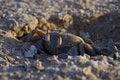 Free Cautious Crab Stock Image - 2075591