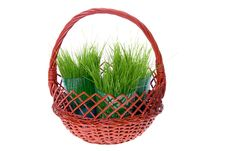 Grass In Basket Stock Images