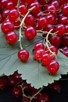 Free Crop Of Red Currant On Leaves Royalty Free Stock Image - 2071046