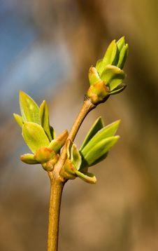 Free Green Spring Stock Photo - 2073500