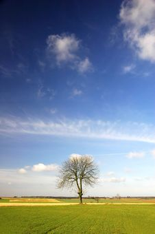 Free Alone Tree Royalty Free Stock Image - 2073766