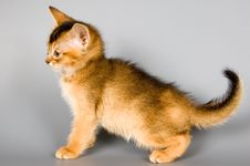 Free Kitten In Studio Royalty Free Stock Photos - 2073818