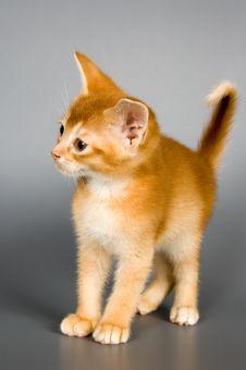 Free Kitten In Studio Royalty Free Stock Images - 2075949