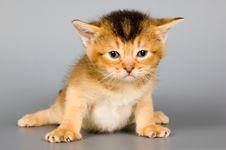 Free Kitten In Studio Royalty Free Stock Photos - 2075968