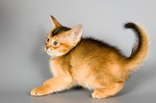 Free Kitten In Studio Royalty Free Stock Images - 2075969