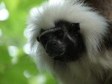 Free Black And White Monkey Stock Photo - 2076890