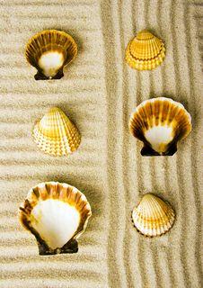 Free Shells Royalty Free Stock Photography - 2077317