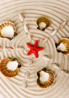 Free Shells Royalty Free Stock Photos - 2077328