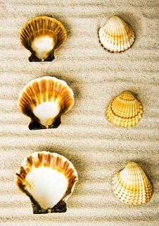 Free Shells Stock Photos - 2077373