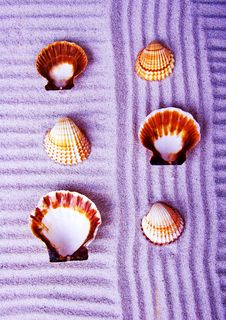 Free Shells Royalty Free Stock Images - 2077379