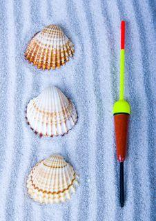 Free Shells Stock Image - 2077421