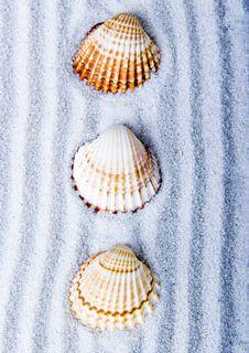 Free Shells Stock Photos - 2077423