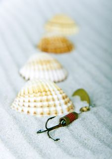 Free Shells Royalty Free Stock Image - 2077426