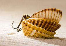 Free Shells Stock Image - 2077431