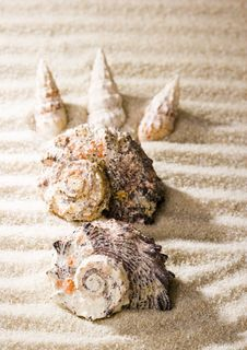 Free Shells Royalty Free Stock Images - 2077469