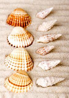 Free Shells Stock Image - 2077481
