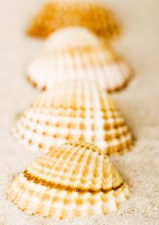 Free Shells Stock Photography - 2077482