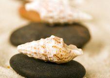Free Shells Royalty Free Stock Photo - 2077485