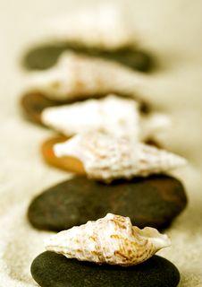 Free Shells Royalty Free Stock Photography - 2077487