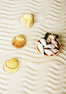 Free Shells Royalty Free Stock Photos - 2077518