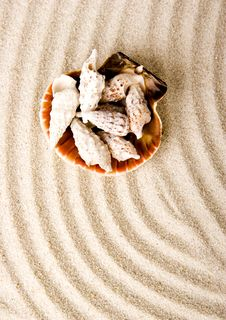 Free Shells Royalty Free Stock Images - 2077519