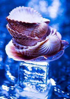 Free Shells Stock Image - 2077521