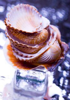 Free Shells Royalty Free Stock Photography - 2077527