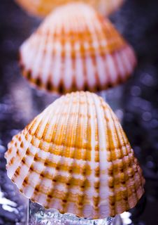 Free Shells Royalty Free Stock Images - 2077529
