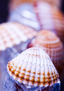 Free Shells Royalty Free Stock Photo - 2077535