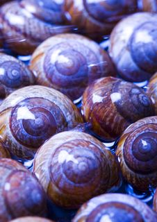 Free Shells In Water Royalty Free Stock Photos - 2077588